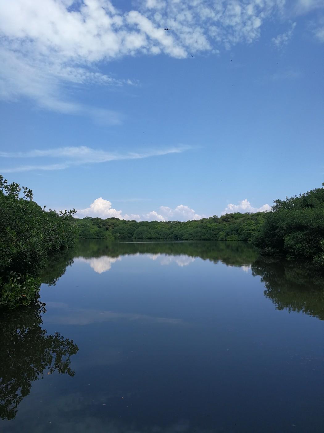 Lagune See Mangroven