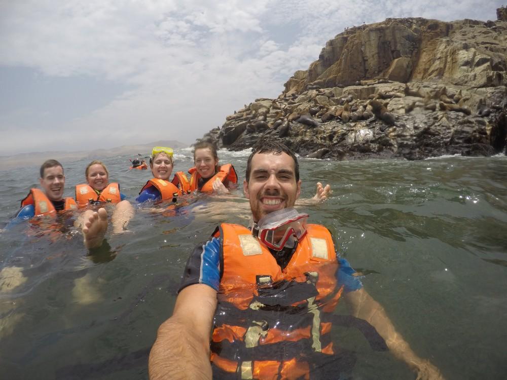 Lima Peru Südamerika Palominoinseln Wilde Tiere Natur Seelöwen Schwimmen