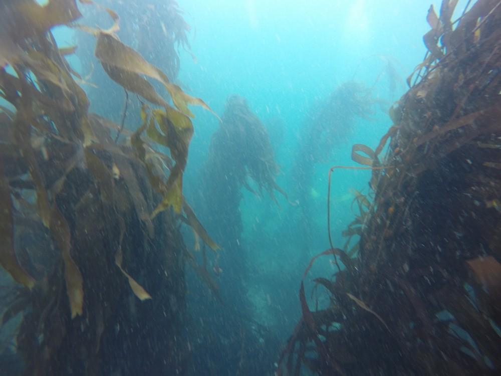 Tauchen Pucusana PADI Algenwald Tiere Fische Krebse Meer Eiskaltes Wasser Taucher Selfie