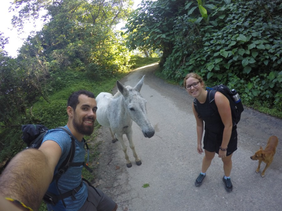 Pferd Weg Wandern