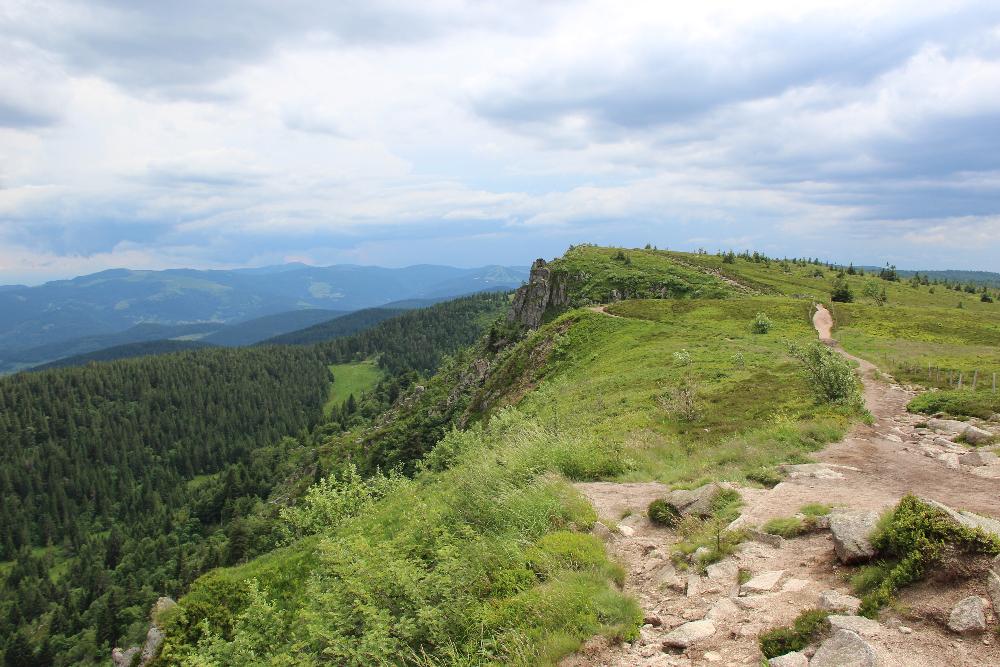 Aussicht-Wald