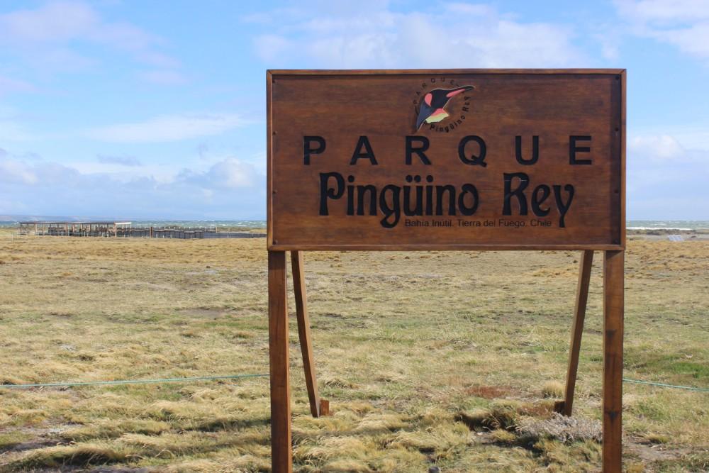 Pinguine Kolonie Königspinguine Feuerland Chile Patagonien Süden Südamerika