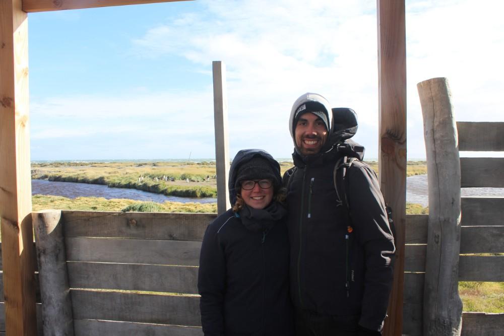 Pinguine Kolonie Königspinguine Feuerland Chile Patagonien Süden Südamerika Aussichtspunkt