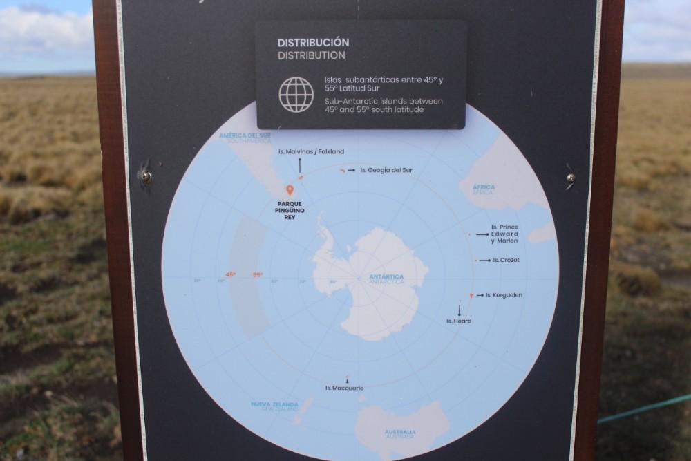 Ausbreitung Karte Königspinguine Feuerland Chile Patagonien Süden Südamerika