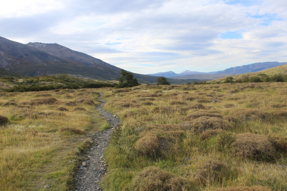 Wanderweg-durch-die-Wildnis