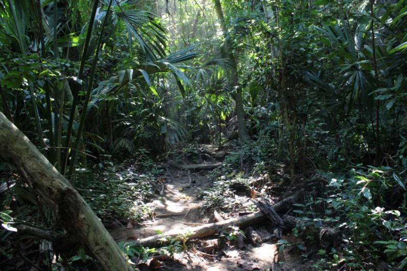 Dschungel Licht Sonne