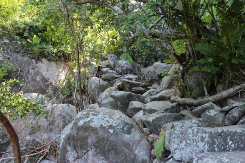 Dschungel Felsen Weg