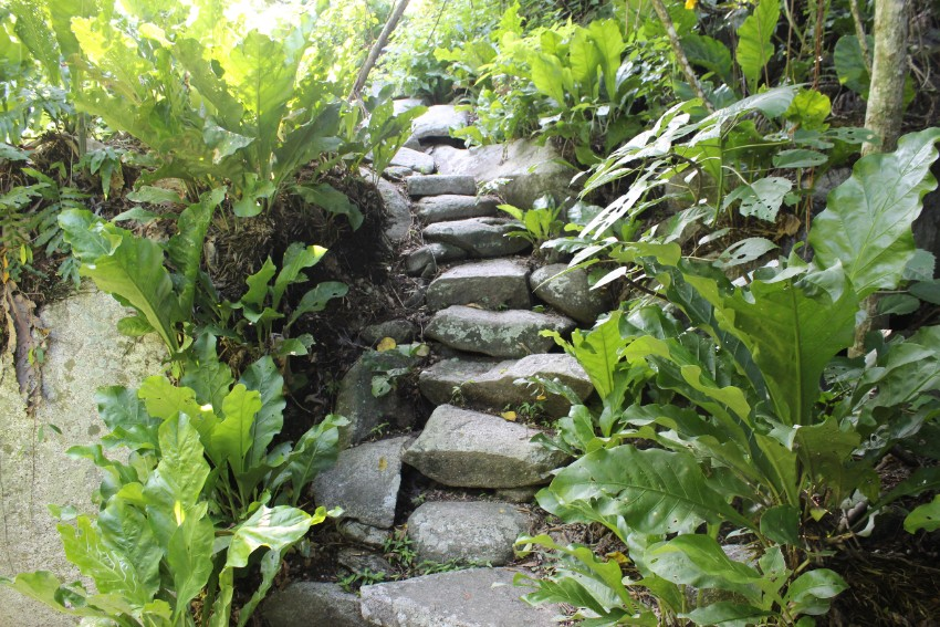 Dschungel Stein Treppe