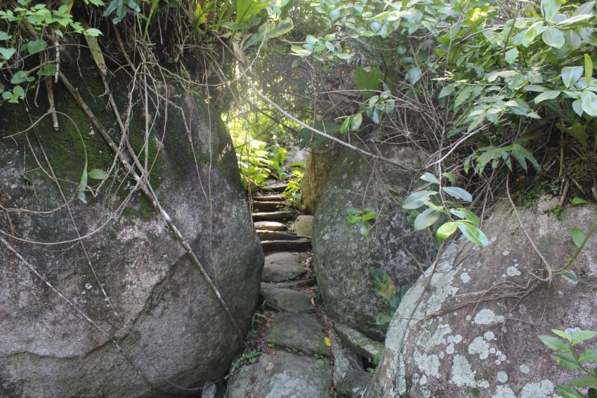 Dschungel Steinweg