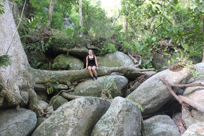 Dschungel Felsen Baum Wurzel Pause