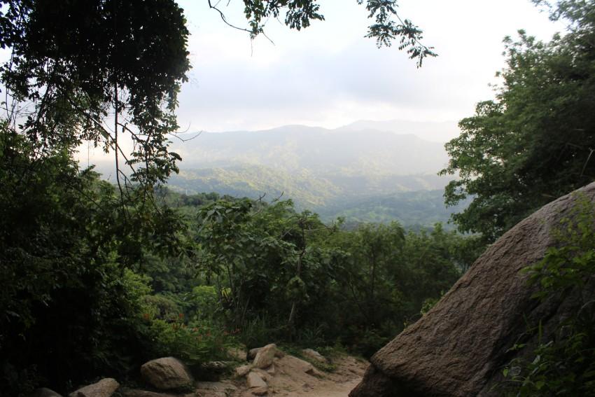 Dschungel Aussicht Wald Natur