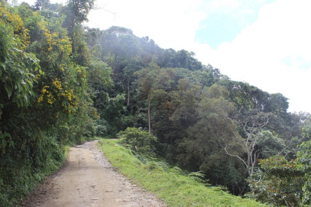 Wanderweg Bergauf Hinauf Berg