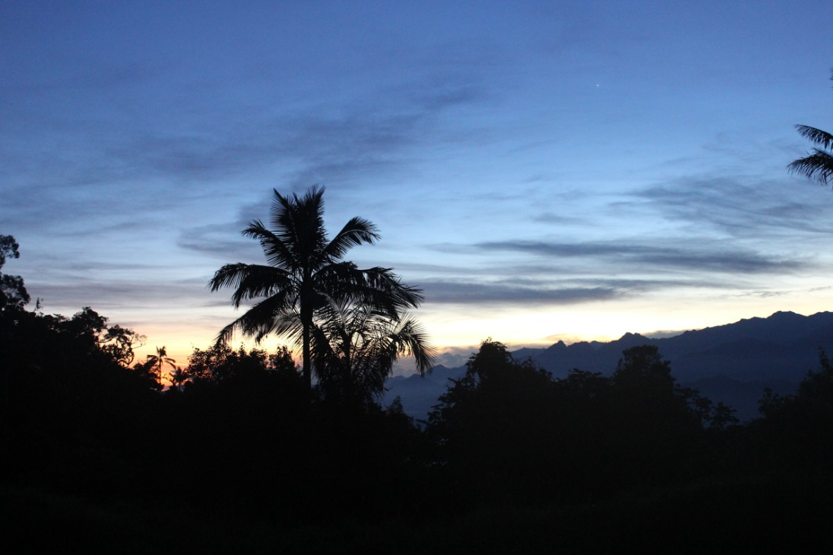 Sonnenaufgang Palme Bäume Berge
