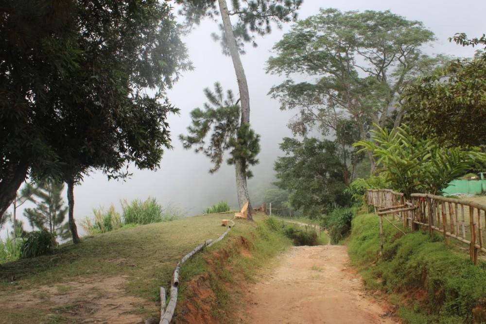 Aussicht Nebel