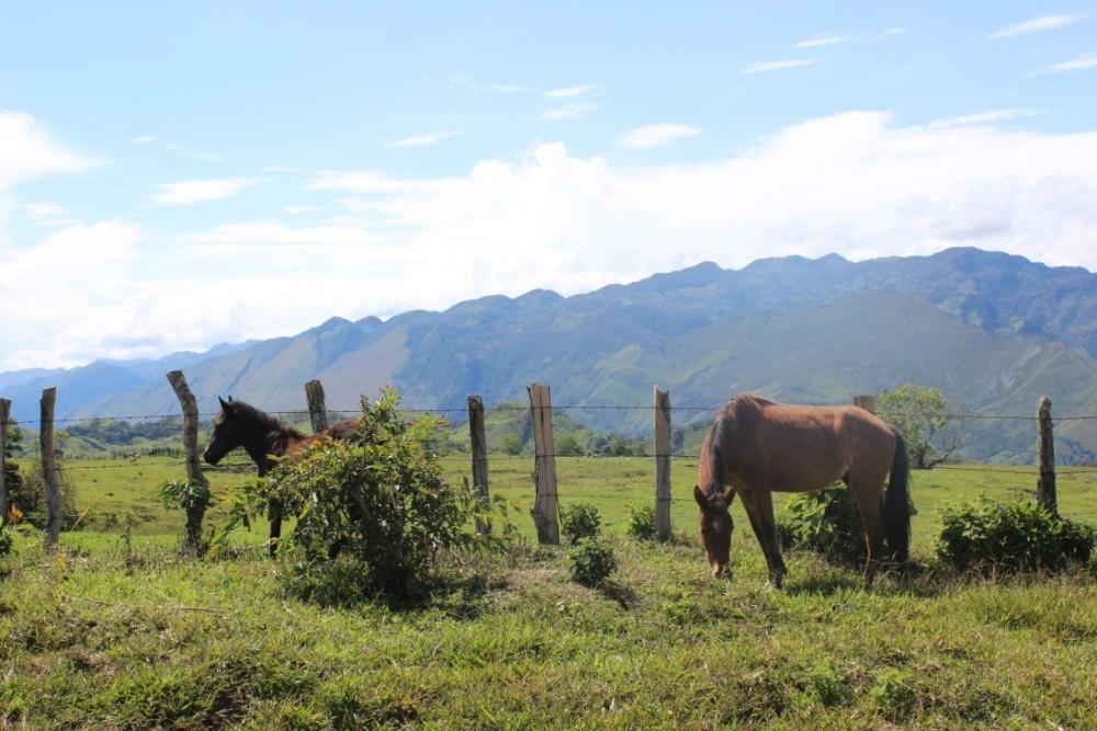 Natur Kolumbien Berge Grün