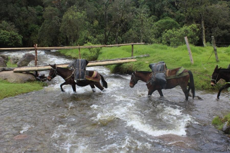 Pferde Fluss Transportmittel