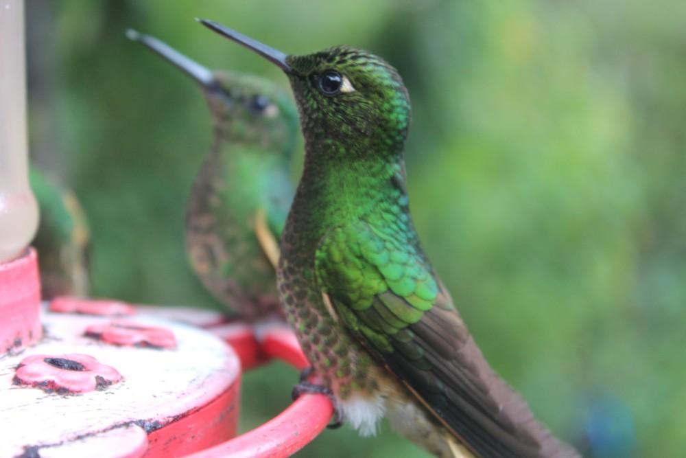 Kolibri Vogel Essen Zuckerwasser
