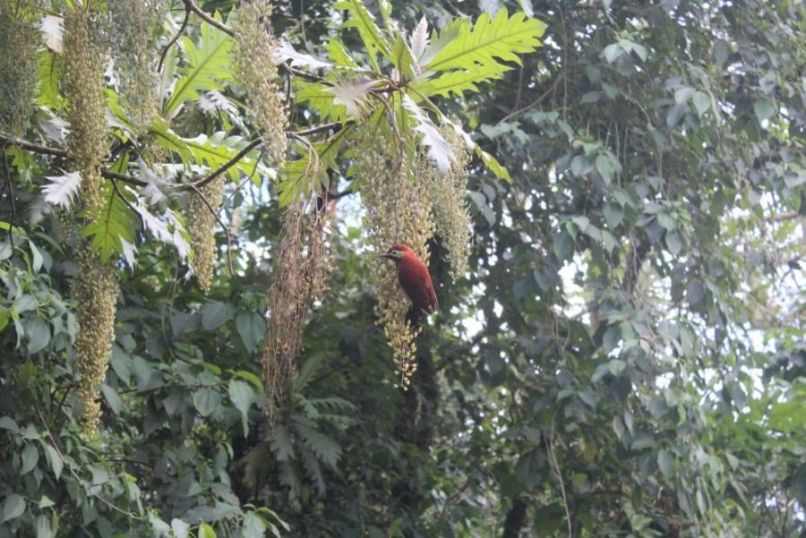 Vogel Wanderung Baum