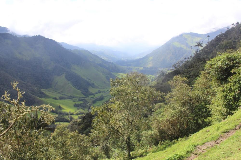 Aussichtspunkt Bäume Natur Berge