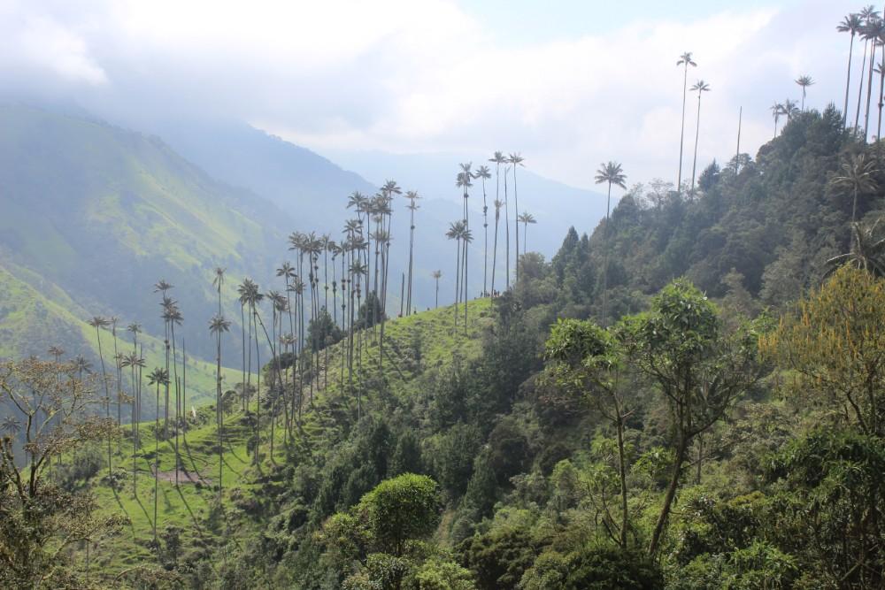 Palmen Groß Berg Natur