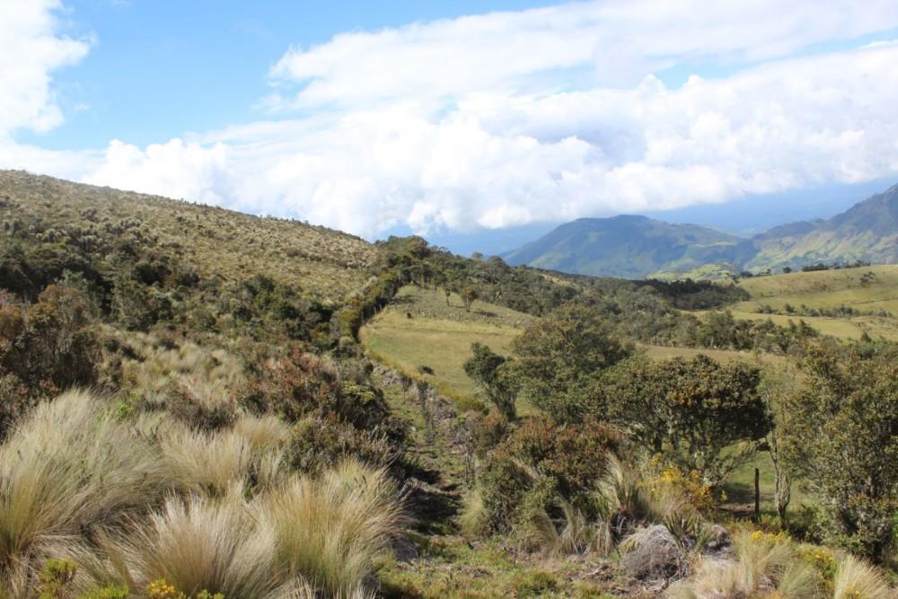 Natur Aussicht Grün Berge
