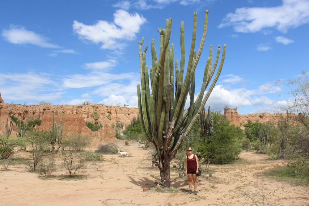 Kaktus Groß Tatacoa Wüste Felsen Blauer Himmel