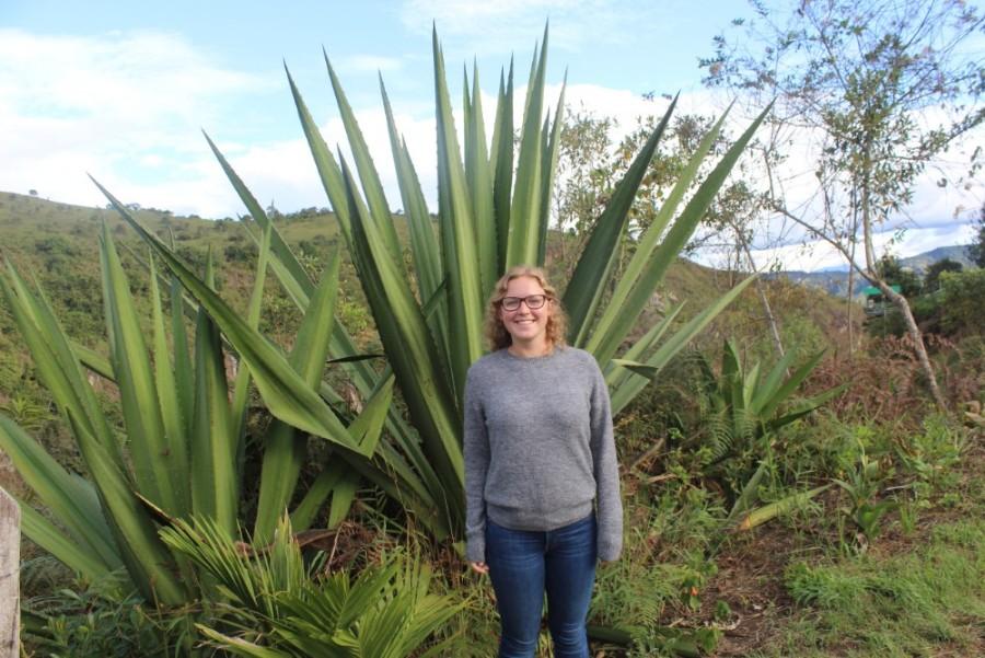 Aloe Vera Riesige Pflanze Natur