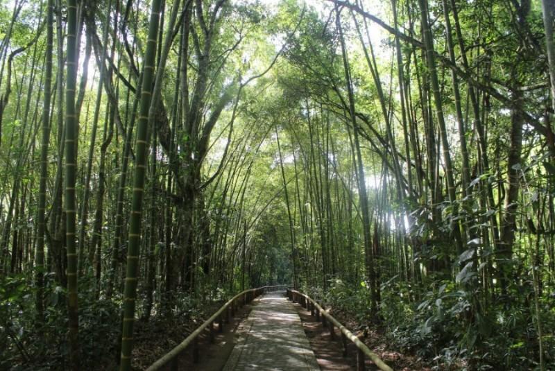 Bambushain Ruhe Natur Schatten Entspannung