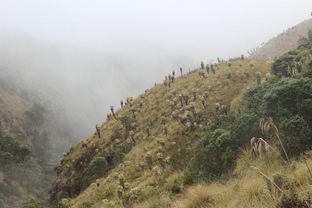 Nebel Tuquerres Kakteen Berg Vulkan Natur