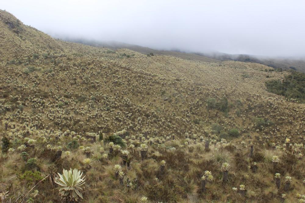 Nebel Kaktus Kakteenmeer Natur Wiese Berg Vulkan