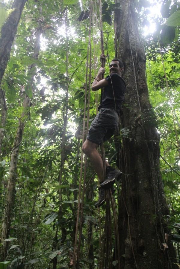 Amazonas Cuyabeno Natur Rainforest Wildlife Kletteraffe Lianen Klettern