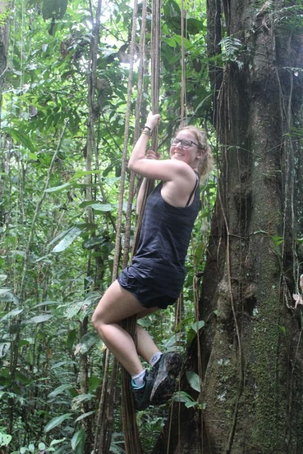 Amazonas Cuyabeno Natur Rainforest Wildlife Lianen Kletteraffe Hoch Hinaus