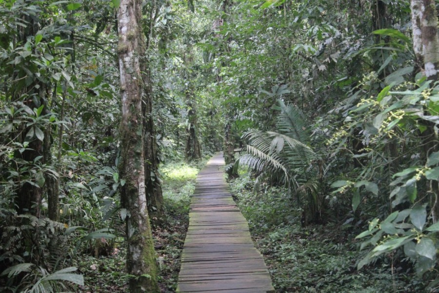 Amazonas Cuyabeno Natur Rainforest Wildlife Weg Wald