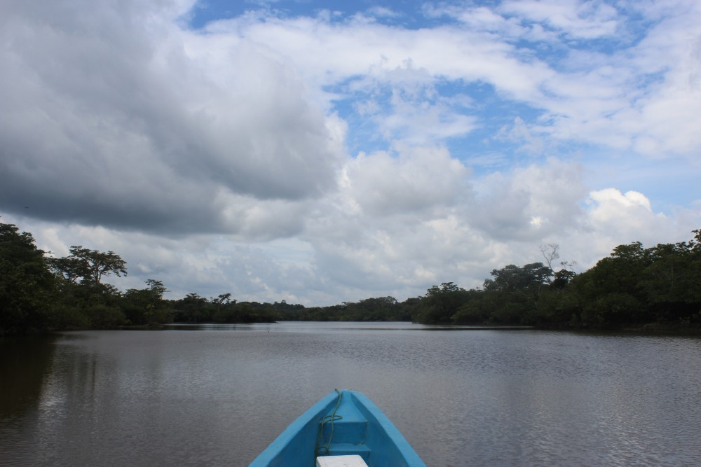 Amazonas Cuyabeno Natur Rainforest Wildlife Ausblick Boot