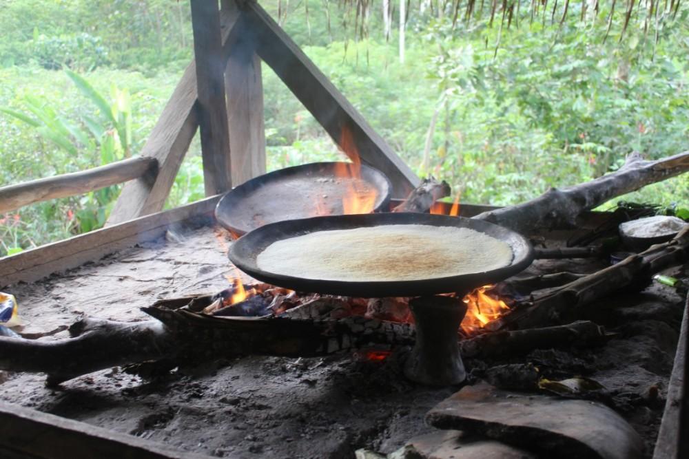 Amazonas Cuyabeno Natur Rainforest Wildlife Yuka Brot