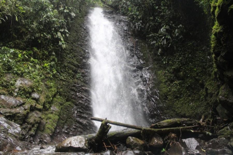 Wasserfall Natur Mindo Nebelwald Wald