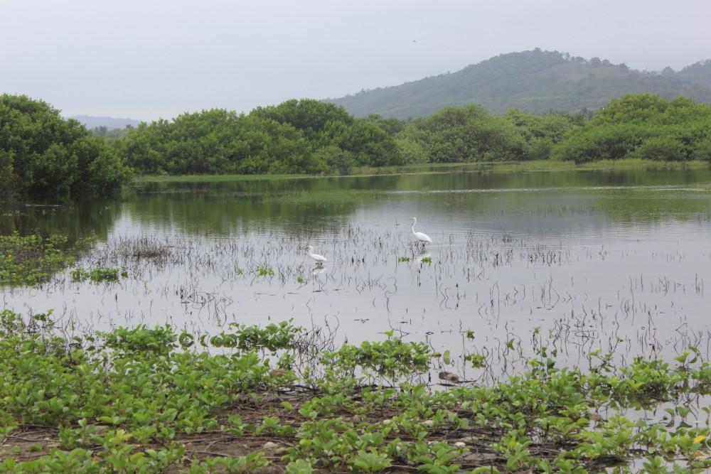 Lagune Vögel Natur Ayampe Ecuador