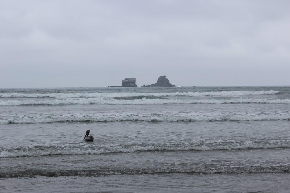 Ayampe Pelikan Meer Strand Natur Tier Ecuador Felsen
