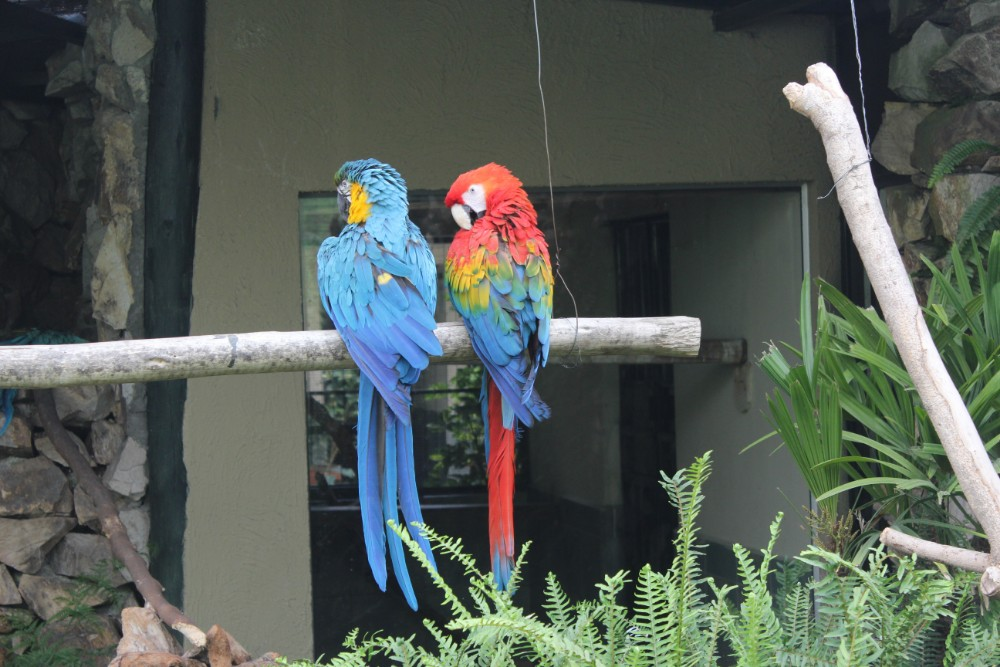 Cuenca Stadt Ecuador Südamerika Tiere Vögel Freunde Gehege