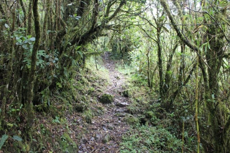 Podocarpus National Park Vilcabamba Ecuador Südamerika Natur Wandern Aussicht