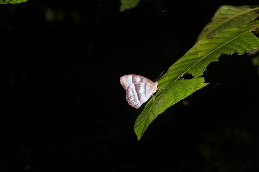 Amazonas Regenwald Peru Südamerika Natur Tiere Wildleben Schmeeterling Wanderung Nacht Schlaf