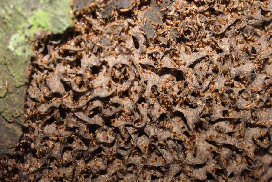 Amazonas Regenwald Peru Südamerika Natur Tiere Wildleben Termiten Nest