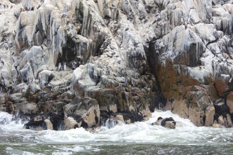 Lima Peru Südamerika Palominoinseln Wilde Tiere Natur Humboldt Pinguine