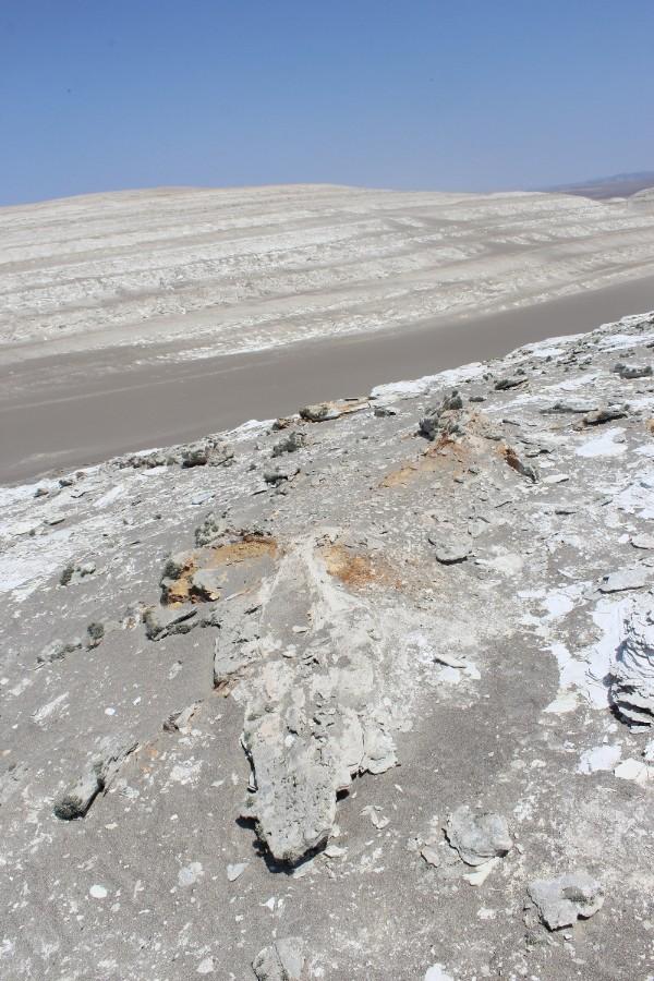 Huaccachina Ica Peru Südamerika Wüste Fossil Alt Tier Meer