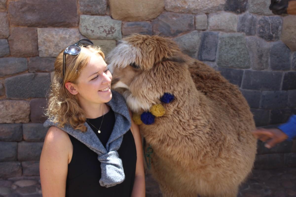 Cusco Peru Südamerika Stadt der Könige Alpaca Kuss Freundliche Tiere