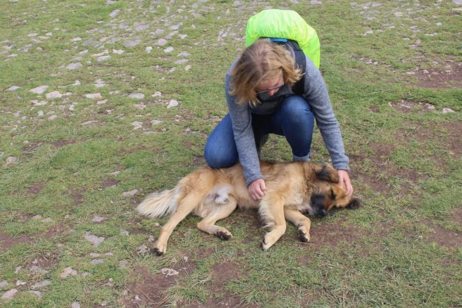 Cusco Stadt der Könige Peru Südamerika Hunde Tierliebhaber Streuner BesterfreunddesMenschen