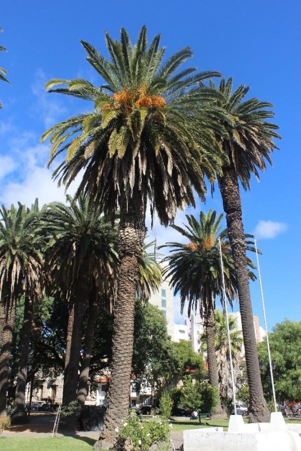 palmen-im-park