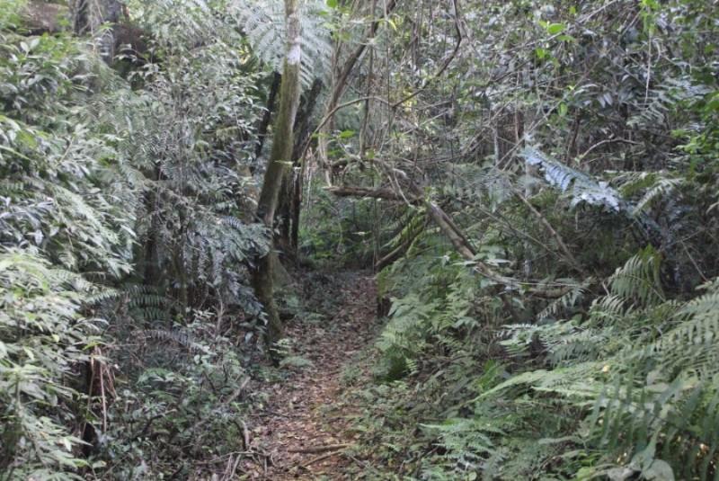 wanderweg-im-nationalpark-san-rafael